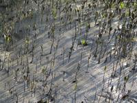 Sundarbans Oil Spill Featured Image